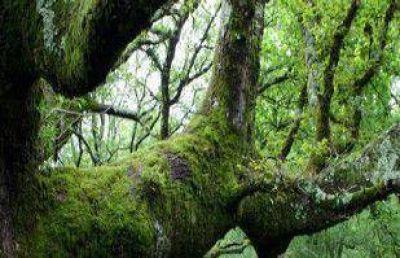El Cofema acordó la creación del Fondo Fiduciario para Bosques Nativos