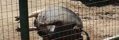 Por las muertes reiteradas de animales, piden el cierre del Zoo Yastay