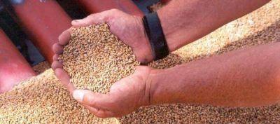 Advierten que los productores de trigo quieren ir a un paro