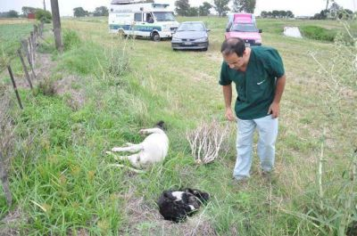 La Justicia investiga la muerte de otros tres perros