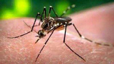Se confirmó el primer caso importado de Chikungunya