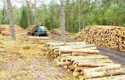 Se destinarán 15 millones de dólares a industrias forestales de la provincia