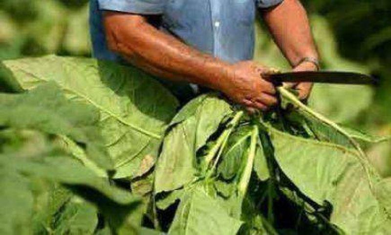 Tabacaleros ya pueden cobrar el pago del Plan Forestal 2005