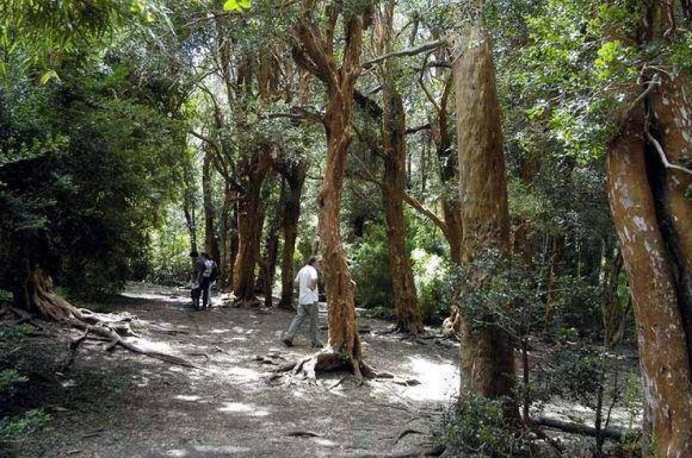 Vecinos dejarán el ente mixto si no mejoran control del bosque Llao Llao