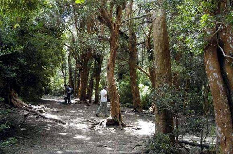 Vecinos dejar�n el ente mixto si no mejoran control del bosque Llao Llao