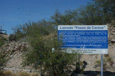 El Paseo de los Cactus podría costarle al municipio $5 millones