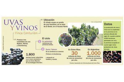 Resurge la vitivinicultura y florece con acento paranaense