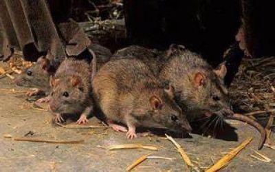 Detectan caso de hantavirus en Chivilcoy
