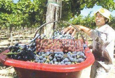 Defienden políticas de asistencia al sector vitícola