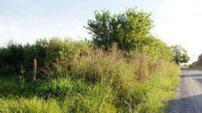Municipio limpiará terrenos baldíos