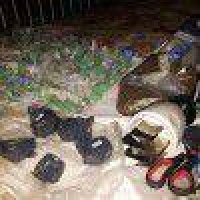 Cuatro detenidos por droga en Necochea