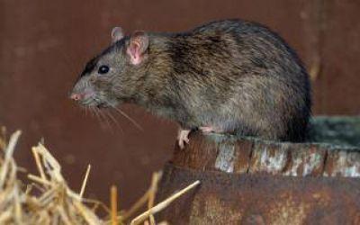 Alerta por Hantavirus en localidades bonaerenses