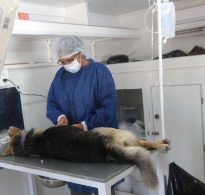 Castración de mascotas para el mes de febrero a cargo del municipio