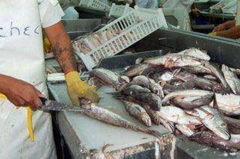 Pesca: STIA pidió a empresas y Gobierno recuperar la actividad