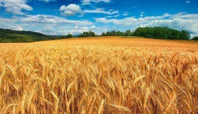 Hubo una nueva reunión por la comercialización del trigo