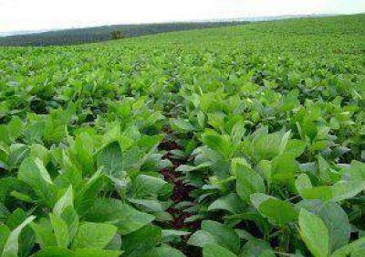 Esperan una excelente cosecha de soja en Junín