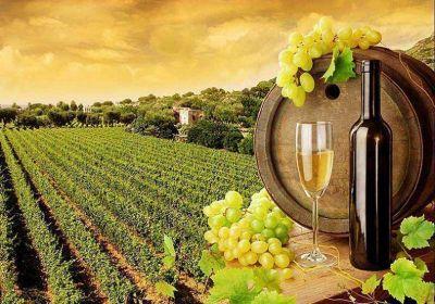 Los factores que desataron la actual crisis del vino
