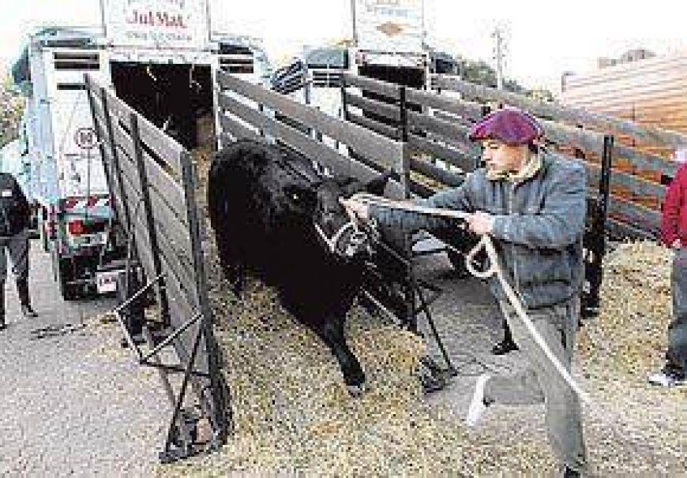 La Rural ya está en marcha y abre sus puertas este jueves