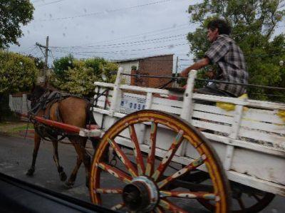 Se viene la tolerancia cero para los caballos en las calles rosarinas
