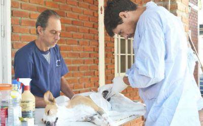 Se realizan castraciones a animales en los barrios