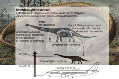 Los restos del gigantesco Titanosaurio ya están en Río Gallegos