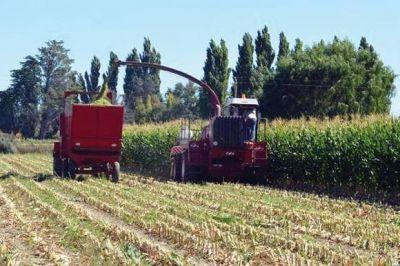 Productores del Valle Inferior iniciaron cosecha de 100 hectáreas de maíz