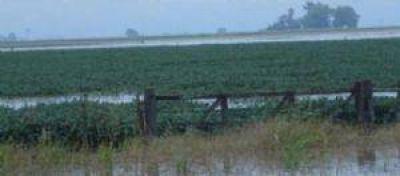 Nuevas lluvias complicarán las cosechas de caña y limón