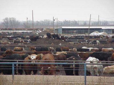 Diputados aprobó un proyecto para regular los feed lots