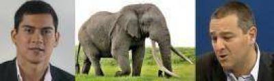 Un concejal tránsfuga justificó el safari de Curly por Sudáfrica: