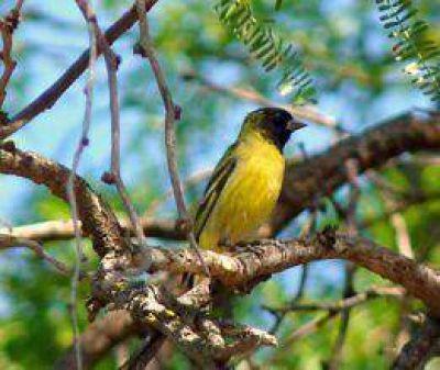 Reconocimiento de aves del Parque