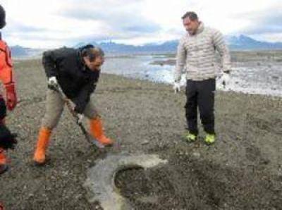 Se realiz� una nueva jornada de limpieza costera