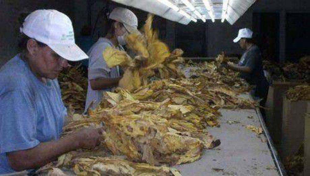 Corrientes: La cámara del tabaco dejó sin obra social a los productores