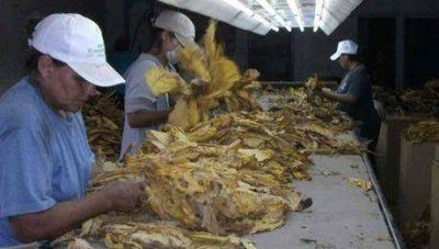 Corrientes: La c�mara del tabaco dej� sin obra social a los productores