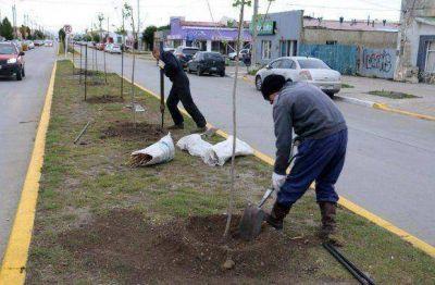 Continúan los trabajos de forestación en Río Grande
