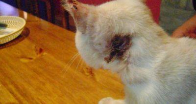 Denuncia penal por maltrato animal y agresiones