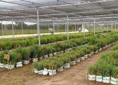 Producción – pusieron en marcha el Parque Foresto-industrial de Arrayanal