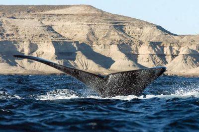Chubut, más cerca de obtener la distinción de la Reserva de Biósfera más grande de la Argentina