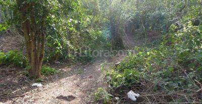 Confirman que son huesos humanos lo hallado en Alto Verde