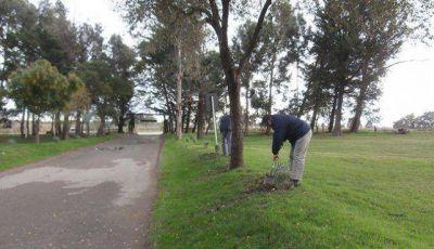 Avanza el plan municipal de forestación