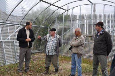 Buscan una producción hortícola local a escala para el autoabastecimiento