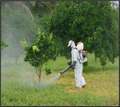 """Explican la necesidad de fumigar con productos """"poco peligrosos"""" y de cultivar en zona urbana"""