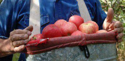 Crisis frutícola: el Gobierno manifestó preocupación por incumplimientos de Pichetto y Nación