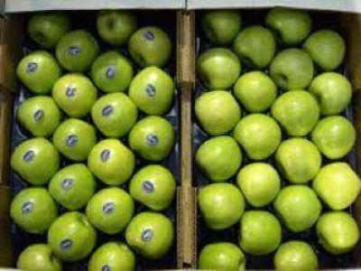 Diomedi: Continúan las gestiones para ingresar nuevamente fruta a Brasil