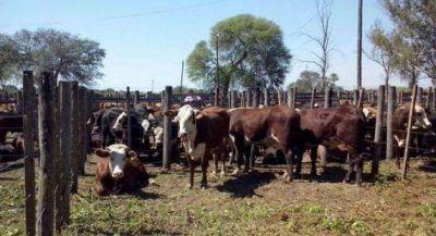 Se vendieron más de 2.500 animales en la SRF