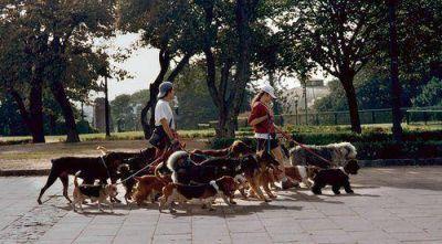 Los paseadores de perros tendrán que estar registrados y tener una credencial en vigencia