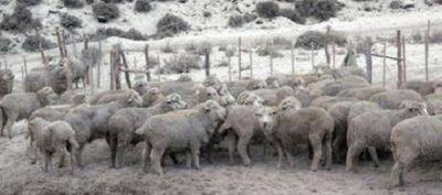 Piden devolución y quita definitiva de retenciones a la lana
