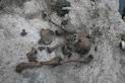 Autorizan ADN para los huesos encontrados en el arroyo de Wheelwright