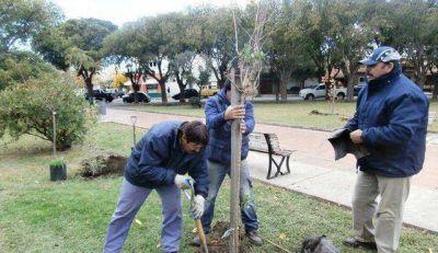 Intensa tarea de forestación de la municipalidad