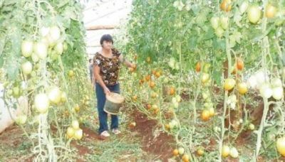 Misiones es la provincia con más pequeños productores agrícolas