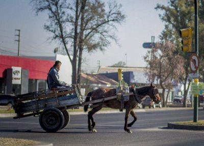 Se trabaja en una nueva ordenanza para los carreros